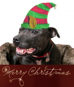Maggie christmasjpeg